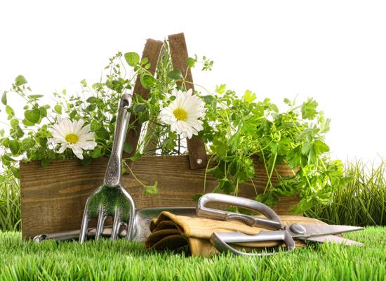 Course Image Jardinería (Curso Completo)