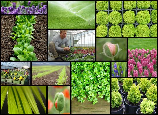 Course Image Producción de Plantas Ornamentales